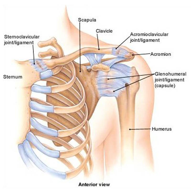 a térdízületek belső részleges törése a térd izületi gyulladása